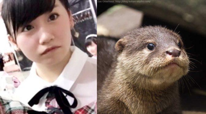 kojimako beaver